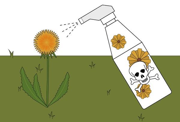 Уничтожение сорняка гербицидами