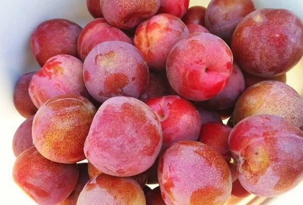 Плумкот спелые плоды