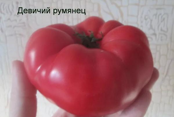 Девичий румянец томат