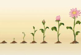 ФФитогормоны для растений