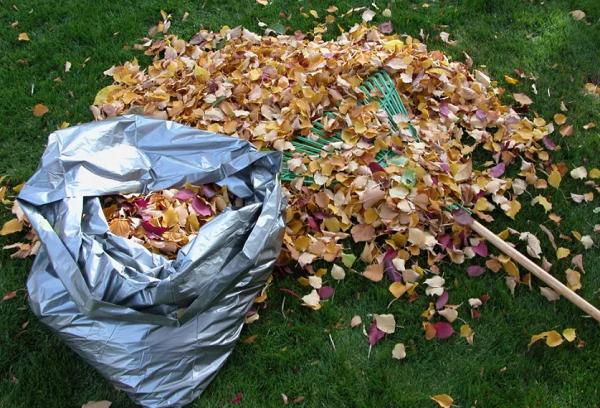 Сбор листьев для компоста