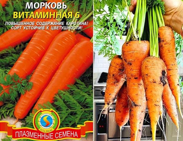 Морковь витаминная семена