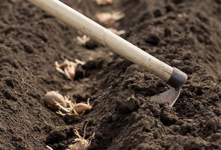 Фаза посадки картофеля