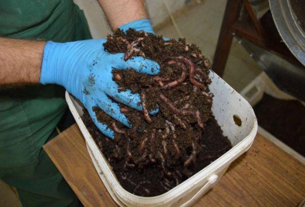 Приготовление субстрата для червей разного вида
