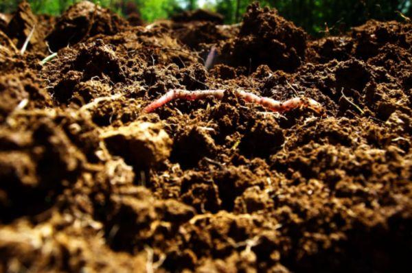 Заготовка почвы и маточного поголовья