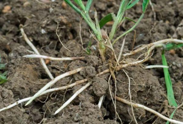 Сорняковая трава