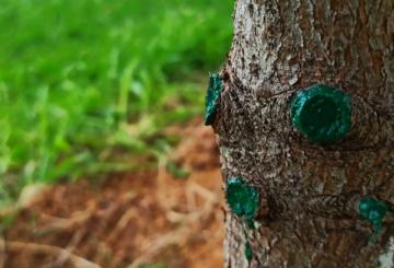 Повреждение стволов плодовых деревьев