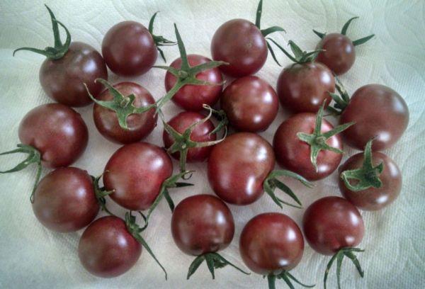 Вишня черная томат