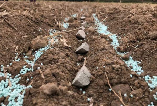 Удобрение картофеля осенью под перекопку