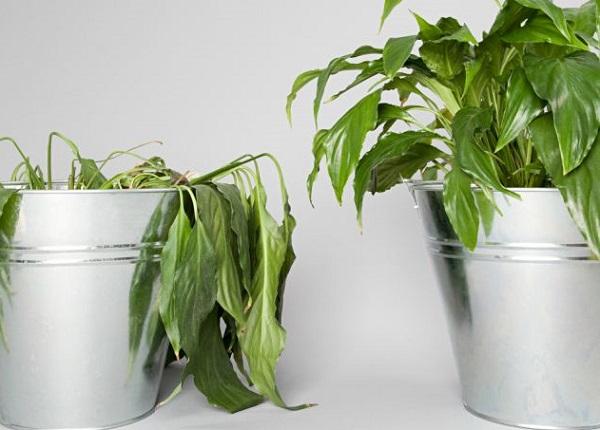 Растительные организмы