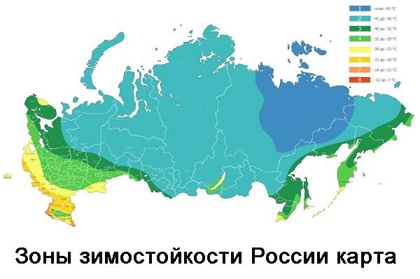 Зоны зимостойкости России карта