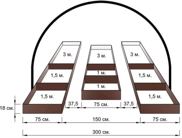 Ширина между грядками в зависимости от вида постройки