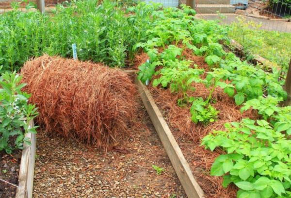 Мульча для выращивания овощей