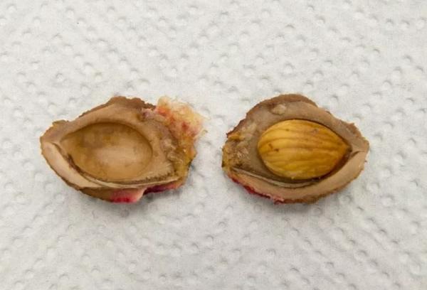 Семена сливы