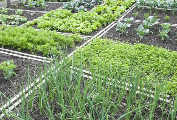 Огород с овощами