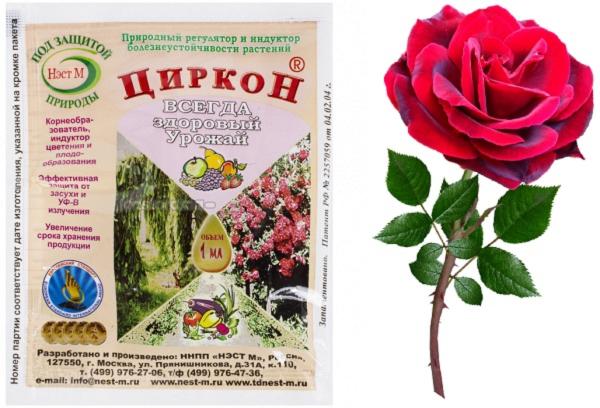 Циркон для роз