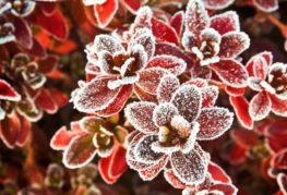 Замерзшие цветы