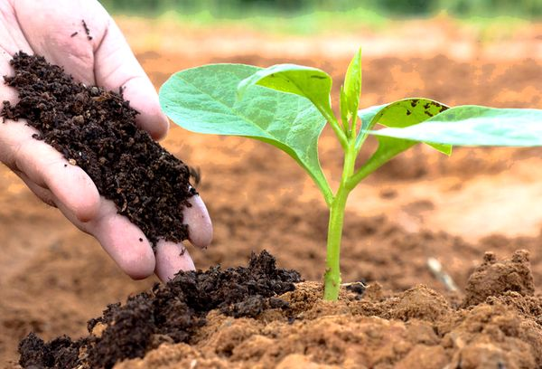 Органика удобрение