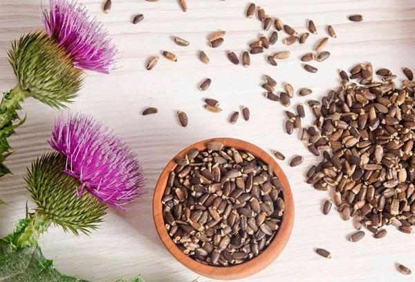 Расторопша цветки и семена